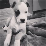 Meet Archie